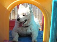 dog-daycare-1