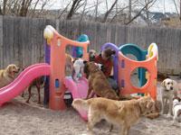 dog-daycare-2
