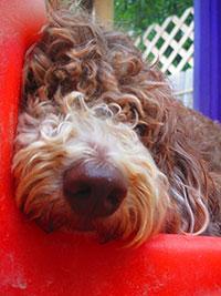 trustworthy-dog-boarding